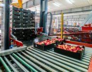 Dla par Holandia praca od zaraz na produkcji bez języka przy owocach Venlo