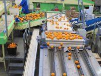 Dla par Holandia praca bez znajomości języka na produkcji sortowanie owoców i warzyw, Venlo