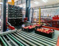 Bez znajomości języka Holandia praca od zaraz przy sortowaniu-pakowaniu owoców, Venlo